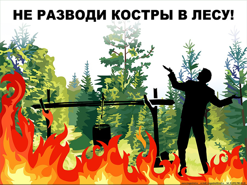 Плакаты «Берегите лес» (ЭКО-01, ламинированная бумага, А2, 3 листа)